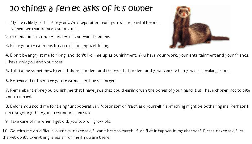 Ferret Care Quotes